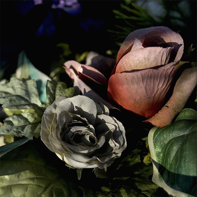 Des roses et du calme